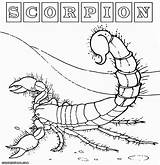 Scorpion Coloring Pages Desert Animal Colorings sketch template