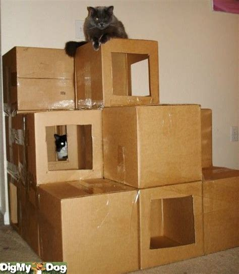 cardboard house for cats cat house i want to build this tomorrow obsessed with