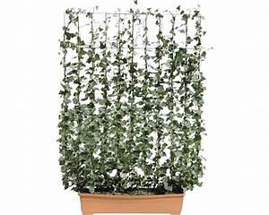 Efeu Pflanzen Kaufen : sichtschutzhecke helix efeu hedera helix 39 woerner 39 100x130 ~ Michelbontemps.com Haus und Dekorationen