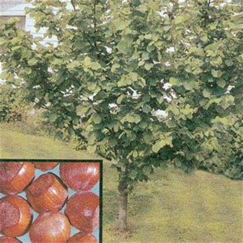 Discount Fruit Trees, Shade Trees, Berry Plants And More