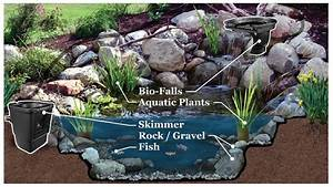 What Is An Ecosystem Backyard Premier Ponds of Maryland