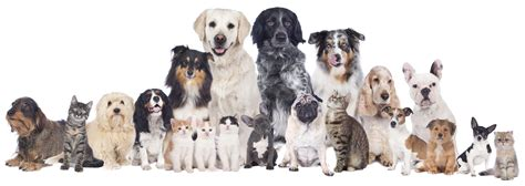Animal Rescue Wallpaper - f a c t animal rescue partnership saratoga honda