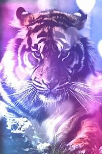 Galaxy Tiger | tiger | Pinterest | Galaxies, We heart it ...