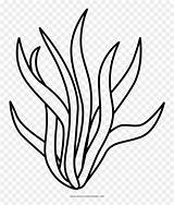 Clipart Seaweed Coloring Hd Vhv sketch template