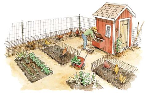 in the garden and more chickens in the garden eggs meat chicken manure fertilizer and more organic gardening