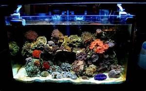 Coole Aquarium Deko : aquarium einrichtung korallen aquarium einrichtung sand blaues licht aquarium deko lifestyle ~ Markanthonyermac.com Haus und Dekorationen