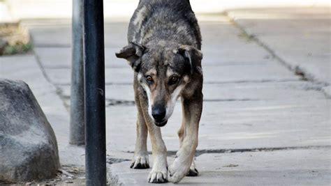 un petit chien dans la rue un chien incapable d oublier ma 238 tre