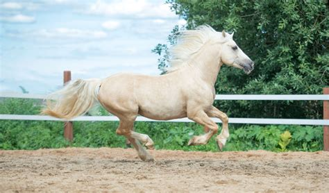 horse hd photoshoot collections flight describe nature