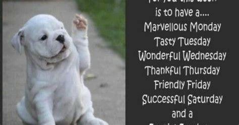great week hey   pinterest dog