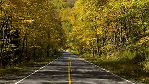 Download, Wallpaper, 1920x1080, Road, Trees, Autumn, Alley, Full, Hd, Hdtv, Fhd, 1080p, Hd, Background