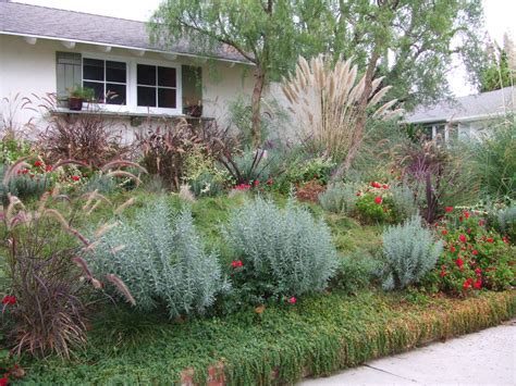 drought resistant landscaping pet friendly and contemporary landscaping ideas interior decorating and home design ideas