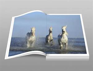 Galloping Horses In Water Book Free Stock Photo - Public ...