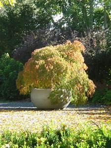 Große Pflanzkübel Winterhart : traumgarten schnell gemacht solit rpflanzen in xxl ~ Michelbontemps.com Haus und Dekorationen