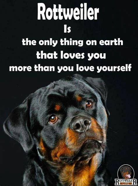 Rottweiler Memes - absolutely rottweiler pinterest truths