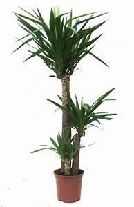 Bamboo, Lamp, Photo, Bamboo, House, Plant