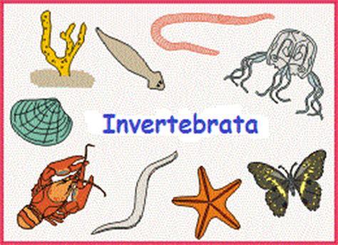 Contoh Sistem Pencernaan Hewan Invertebrata | Contoh 37