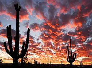 best places to meet women in tucson