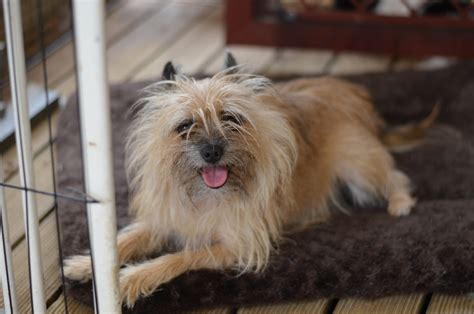 Pets In Emergencies Rspca South Australia