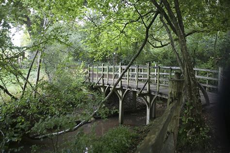 Inside Winnie-the-pooh's Real Hundred Acre Wood