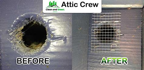 rodent proofing attic crew