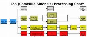 File Tea Processing Chart Svg