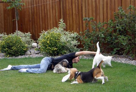 Comportamiento Animal  Cómo Hacer Que Mi Perro Acepte A