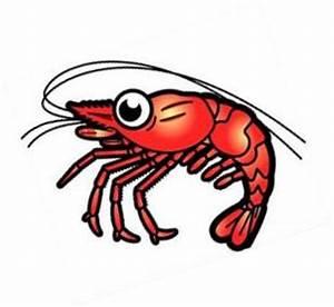 Clipart shrimp - Clipart Collection | Shrimp food clipart ...
