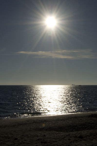 Gabbiano Sul Mare - gabbiano sul mare opera d arte di mario porciello