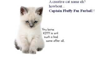 names for cats curious cat names images