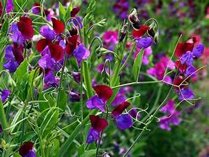 Quand Planter Le Muguet : quelles fleurs planter au printemps you project info ~ Melissatoandfro.com Idées de Décoration