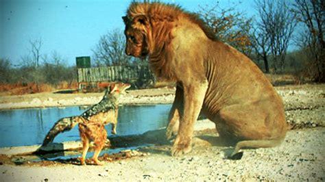 fearless animals animals    afraid