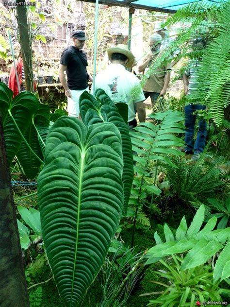 Le Forum Des Fous De Palmiers • Visite Du Jardin De