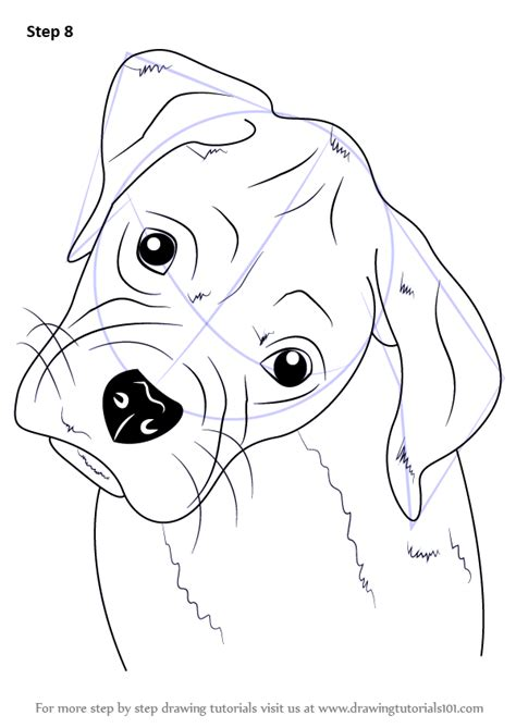 learn   draw boxer puppy face farm animals step  step drawing tutorials