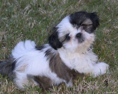 variant mini breeds list breed care breeds