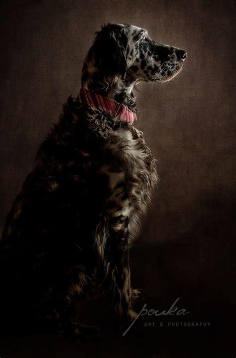 images  pouka fine art pet portraits