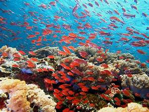 marine ecosystems - National Geographic Education