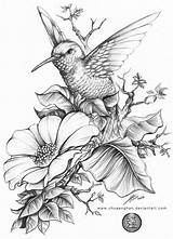 Coloring Pages Hummingbirds Hummingbird A4 Printable Hb Done Sheets 6b 3b sketch template