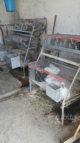 gabbie conigli usate in vendita gabbie conigli per fattrici usate da grosseto posot class