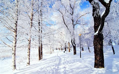 10 Snow Facts to Make You Feel Festive The List Love