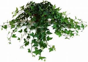 Zimmerpflanzen Für Dunkle Räume : die top 10 pflanzen f r dunkle r ume alle top10 ~ Michelbontemps.com Haus und Dekorationen