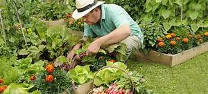 Einfaches Gemüse Für Den Garten : obst und gem se selbst anbauen tipps f r faule g rtner ~ Lizthompson.info Haus und Dekorationen