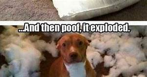 Tumblr has a good handle on the mindset of dogs (26 Photos ...