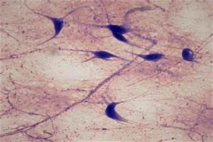 Histology-World! Key Histology Features
