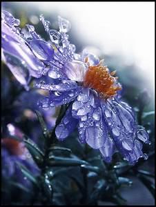 398 best images about RAIN DROPS!! on Pinterest | Daisies ...