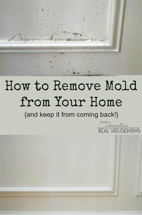 Removing Mold From Painted Walls Remove Mold Mess Up And Cleanses On