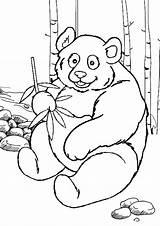 Panda Coloring Pages Bear Printable Colouring Giant Zoo Sheets Animals Animal Preschool Pandabeer Kleurplaat Drawing Line Bears Getcolorings Adult Pattern sketch template