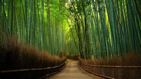 hutan bambu  ultrahd wallpaper wallpaper studio
