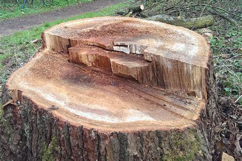 baumstumpf entfernen hamburg baumstumpf entfernen in hamburg treesolution hilft