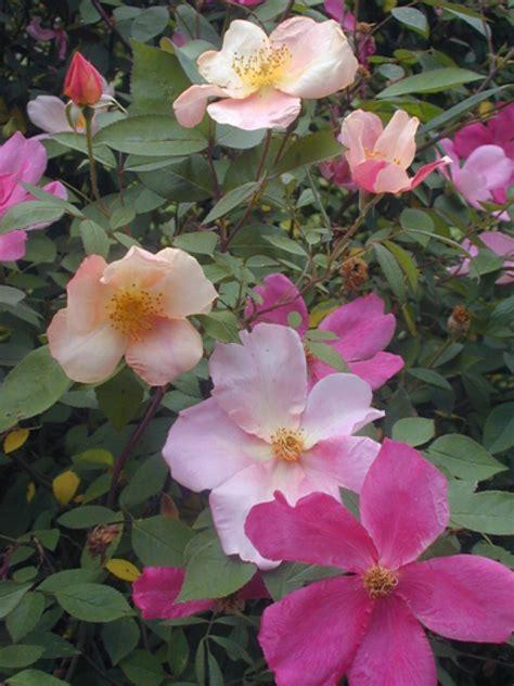 Summerflowering Shrubs Hgtv