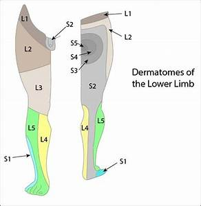 Core Anatomy: Lower limb dermatomes. - FRCEM PrImary Blog